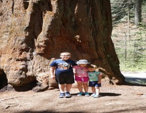 Image of Kids In Front of First Sequoia