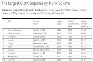 Image of Largest Sequoias By Trunk Volume