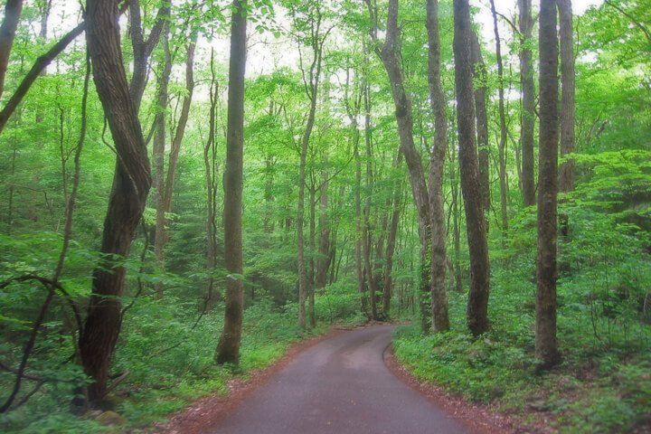 Roaring Fork Trail
