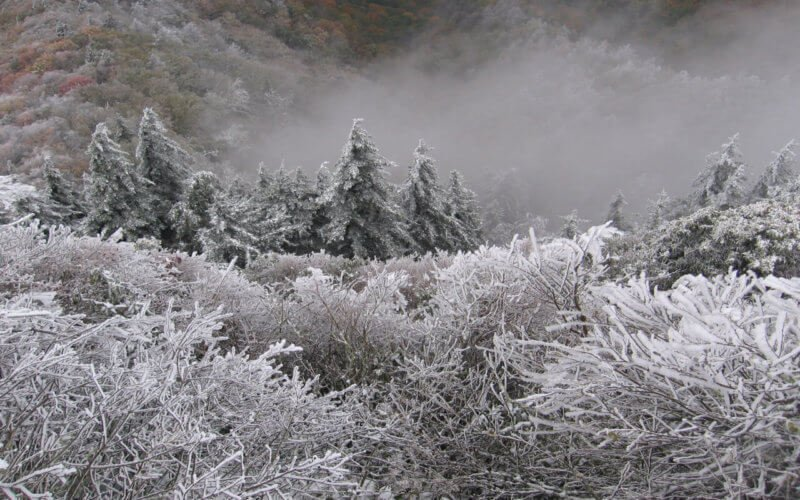 Snow and Rime Ice Smoky Mountains