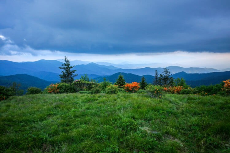 ORANGE BLOSSOMS ROAN MOUNTAIN TENNESSEE