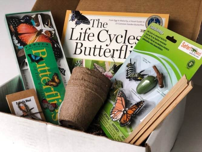 Butterfly Adventure Box