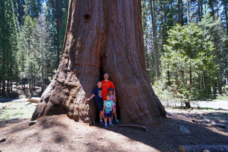 Sequoia National Park With Kids: 2 Day Itinerary and Tips To Prepare The Kids To Visit