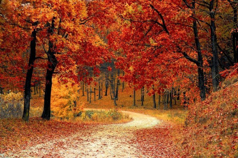 Best Places To Travel In October In The USA