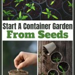 container garden from seeds