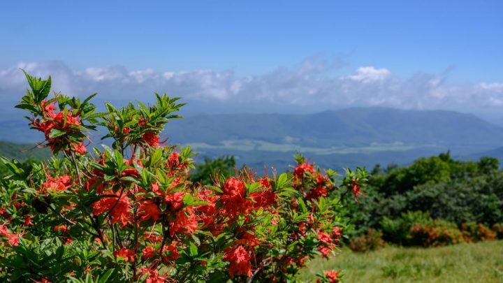 Gregory Bald Smoky Mountains