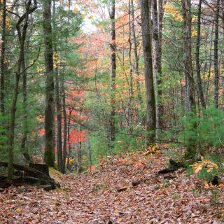 smoky mountain hiking in the fall
