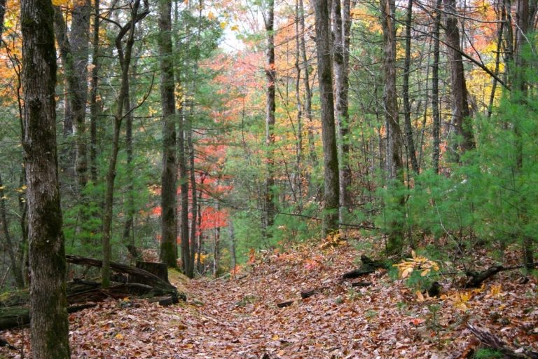 Seasonal Guide to Hiking in the Smoky Mountains